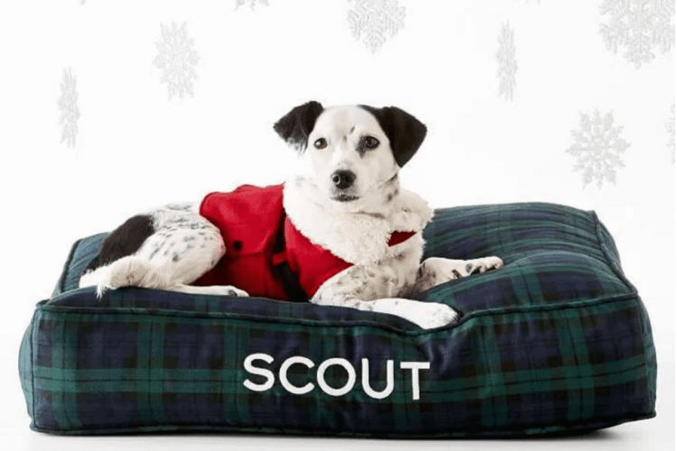 Pet Gift Guide: Dog Holiday Gifts