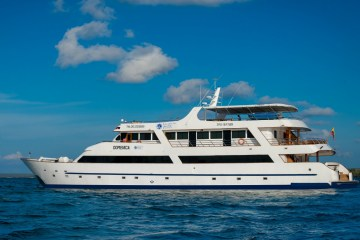 sea star journey feature