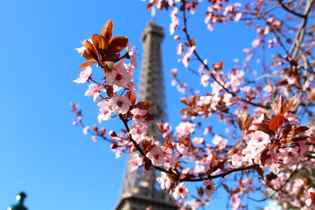 Cherry blossom Paris- Eiffel Tower | The Glittering Unknown