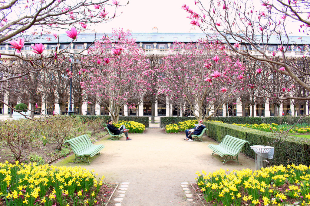 Cherry blossom Paris- Palais Royal | The Glittering Unknown