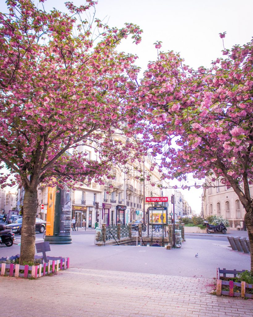 Cherry blossom Paris- Metro stop Falguière, line 12- THE GLITTERING UNKNOWN