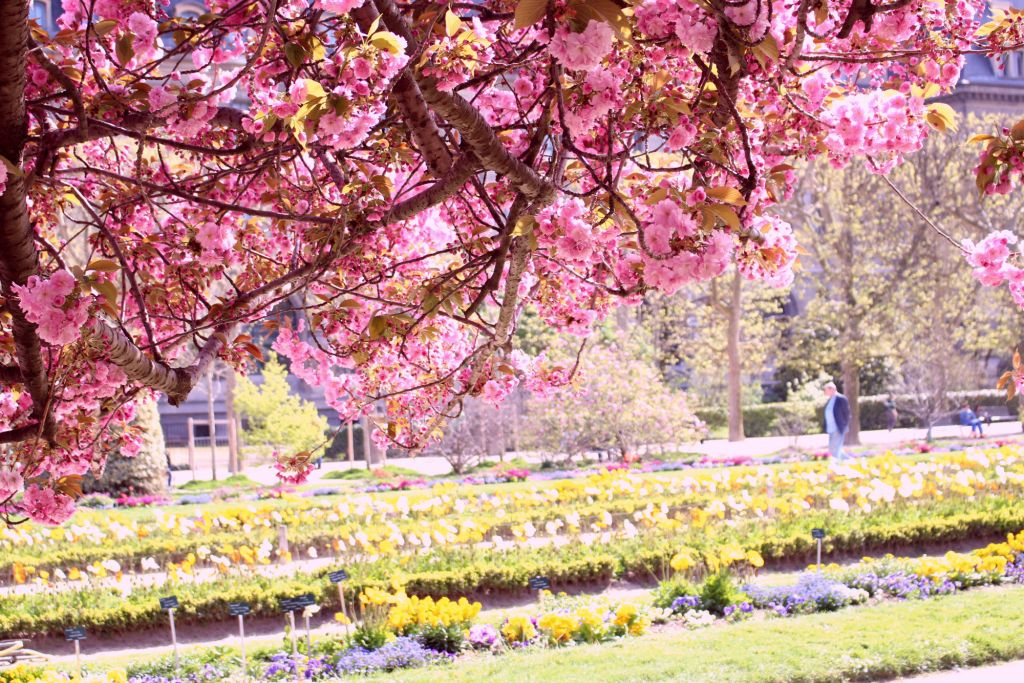 Cherry blossom Paris- Jardin des Plantes| The Glittering Unknown