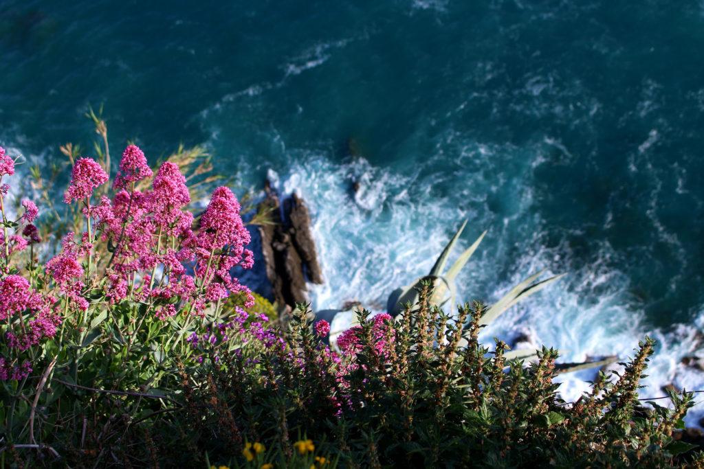 Flowers on a cliff Corniglia Cinque Terre Italy The Glittering Unknown