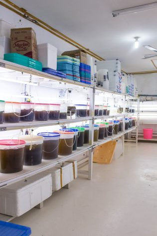 Growing algae at Autore Pearl Farm Tours & Showroom- Why You Need to Visit Lombok, Indonesia NOW