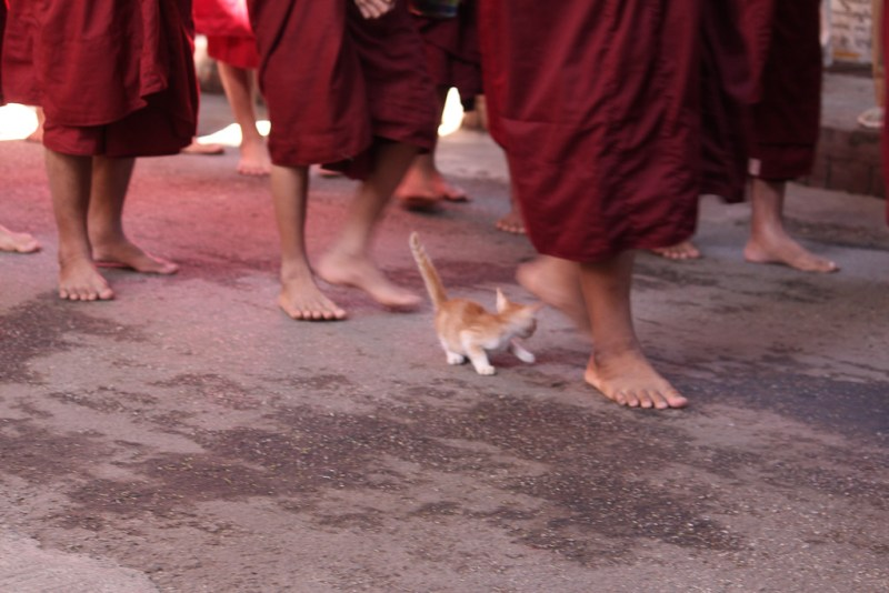 kitten_monks