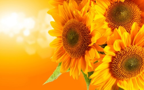 download free 3D wallpapers for windows 7