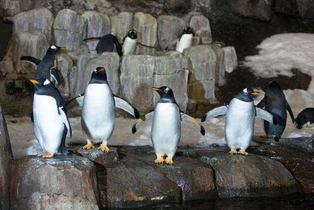 Penguins at the Biodome in Montreal