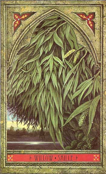 Green Man Tree Oracle