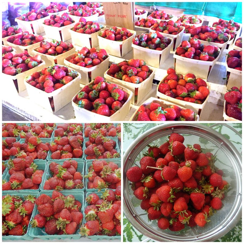 Glorious Maine strawberries