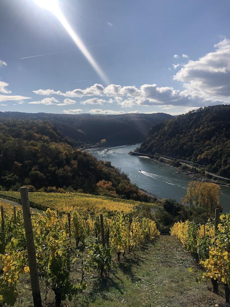Rheinsteig-im-Sonnenschein-an-der-Rheinschleife