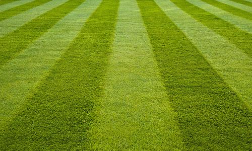 Cut-Grass