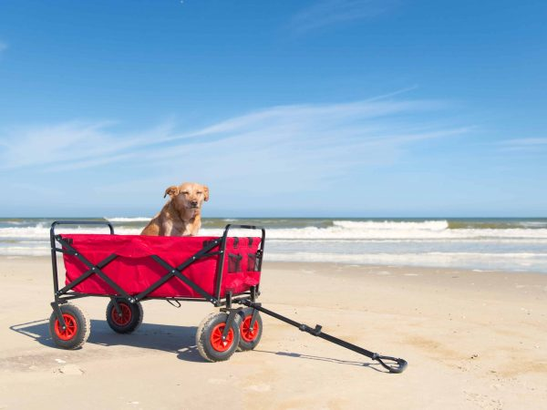 Transport of an old dog in red beach cart standing in front of sea