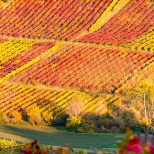 blog wine 2