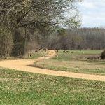 Deer Hunting Canceled After Flooding Depletes Population