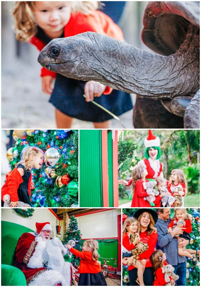 Christmas events in Tampa Florida / Family friendly Christmas events in Tampa Bay / The best Christmas events in Tampa / Christmas at Zoo Tampa