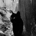 Sergio Larrain Valparaiso, Chile, 1963, black cat