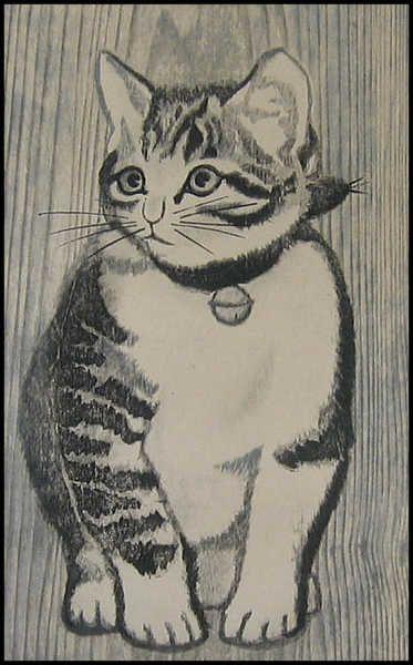 Cat Kitten Masaharu Aoyama