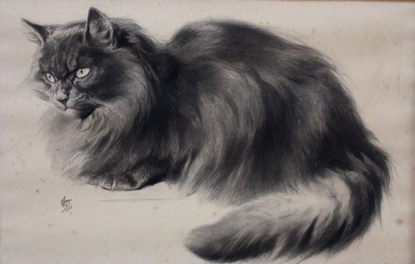 Ferdinand Oger, Maine Coon Cat Sitting