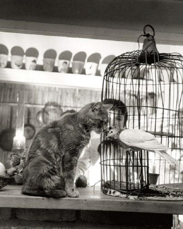 Child, Cat and Dove, Robert Doisneau