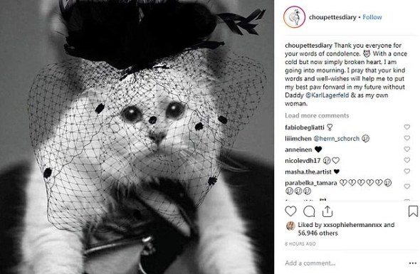 Choupette in Mourning