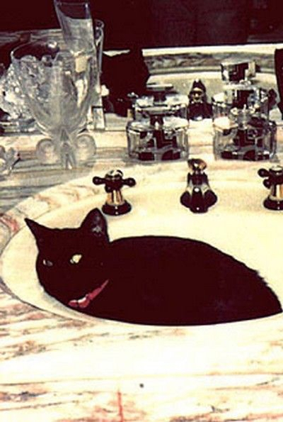 Freddie Mercury's Cat Goliath in Sink
