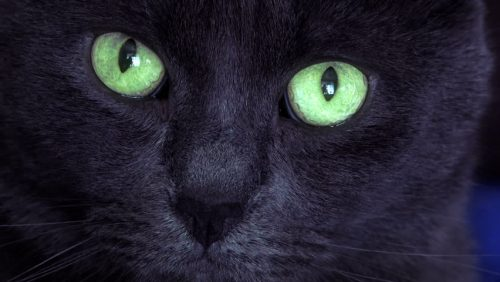 Black cat with green eyes, Jerome K. Jerome