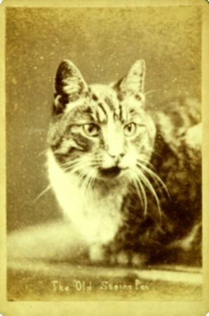 The Old Stein's puss, Harry Pointer