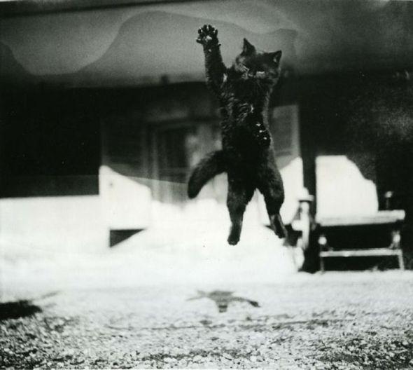 Walker Evans, Black Cat Jumping