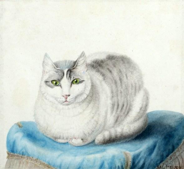 White Cat on Blue Pillow, Sal Meijer