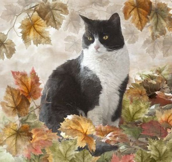 Dianne Woods, Tuxedo in Fall Colors