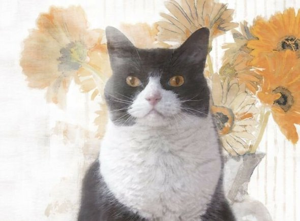 Tuxedo Cat with Flowers, Dianne Woods