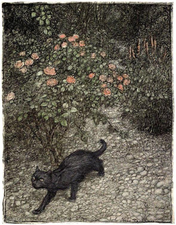 Rackham Black Cat 1907