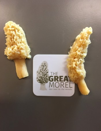 Morel Magnets Set of 2