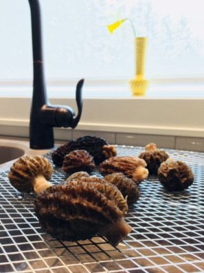 Morels in the Kitchen