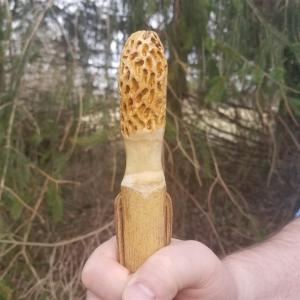 morel hiking stick #2