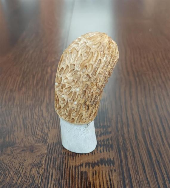 Hand Carved Morels