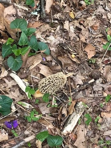 MD_OwingsMills_20200428_Wynters-Morel