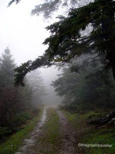δάσος Πάρνωνα
