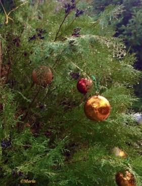 What do Greeks do for Christmas