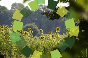 Natuurterrein met zonnebloemen en logo - The Green Circle - Workshops in de Natuur.