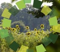 The Green Circle
