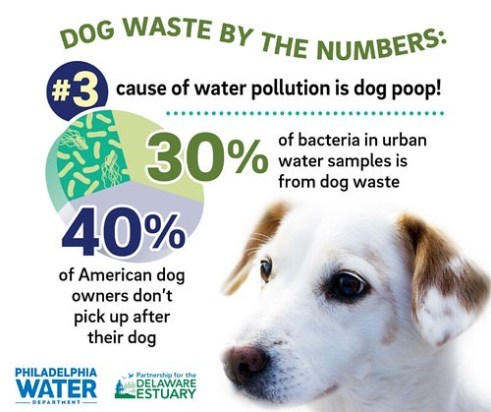 philadelphia water dog waste