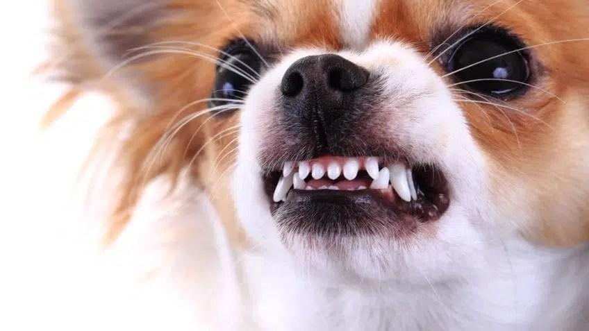 CBD for Aggressive Dogs
