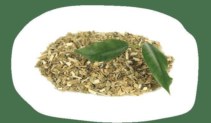 Organic Yerba Mate Extract