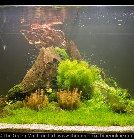 Image of Nature's Chaos Aquarium Plant Package