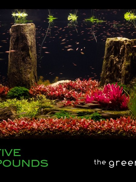 £5 Gift Voucher/Certificate for The Green Machine Aquascaping Store