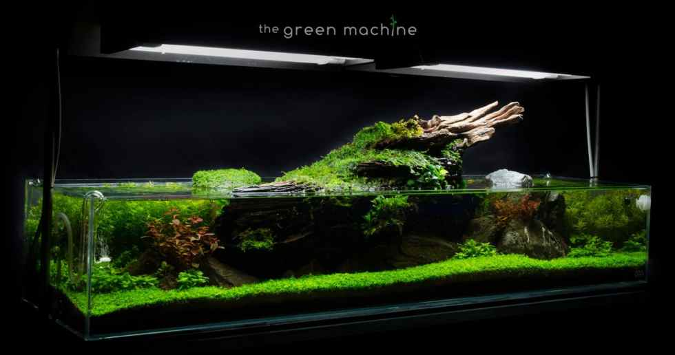 Aquascape Tutorial Video: Simplicity by James Findley ...
