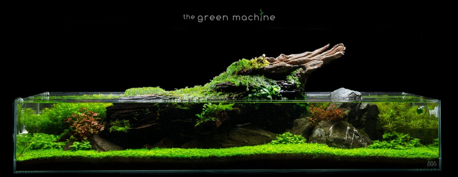 The Green Machine Aquascaping Shop Aquarium Plants Supplies Planted Tank Videos Tutorials Articles