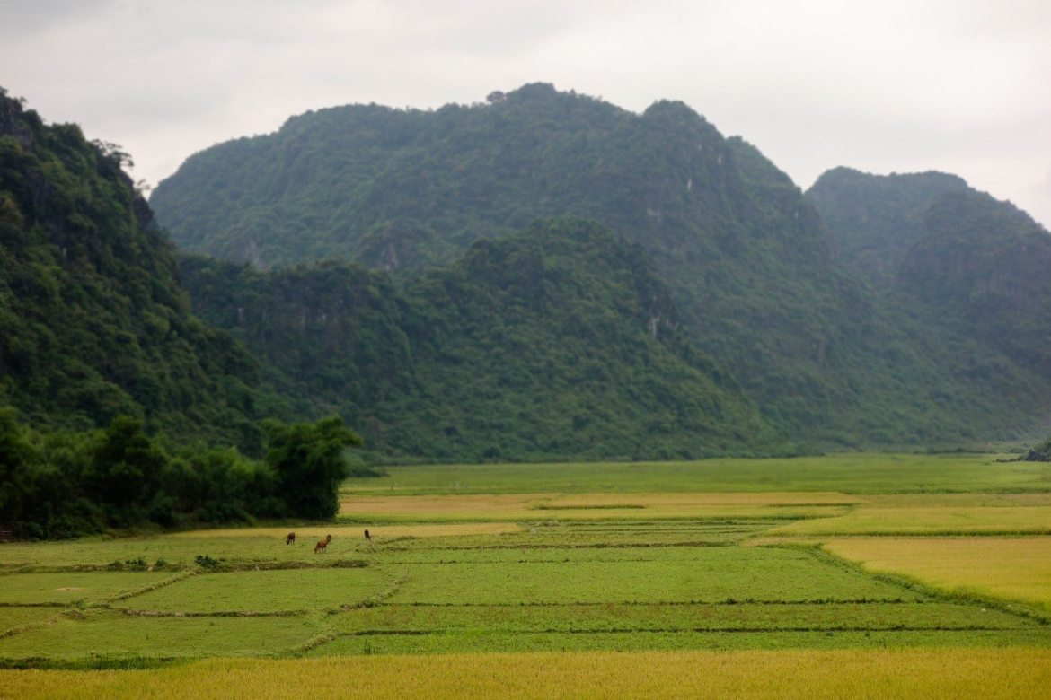 Phong Nha Ke Bang landscapes, cycling through mountaints and rice paddies