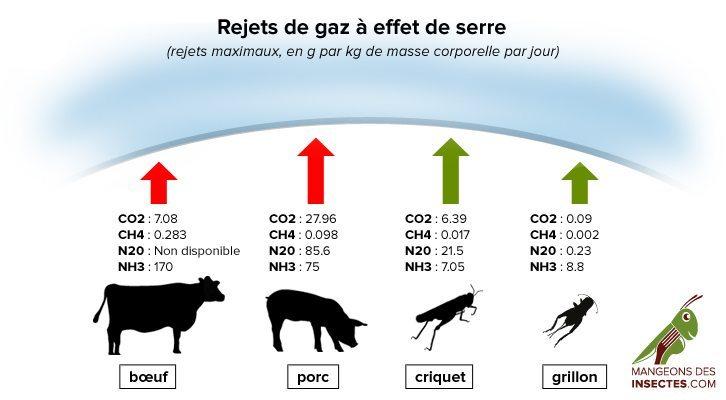 impact écologique production viande